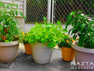 Container Gardening for Rooftops, Patios, Small Spaces or No Yard